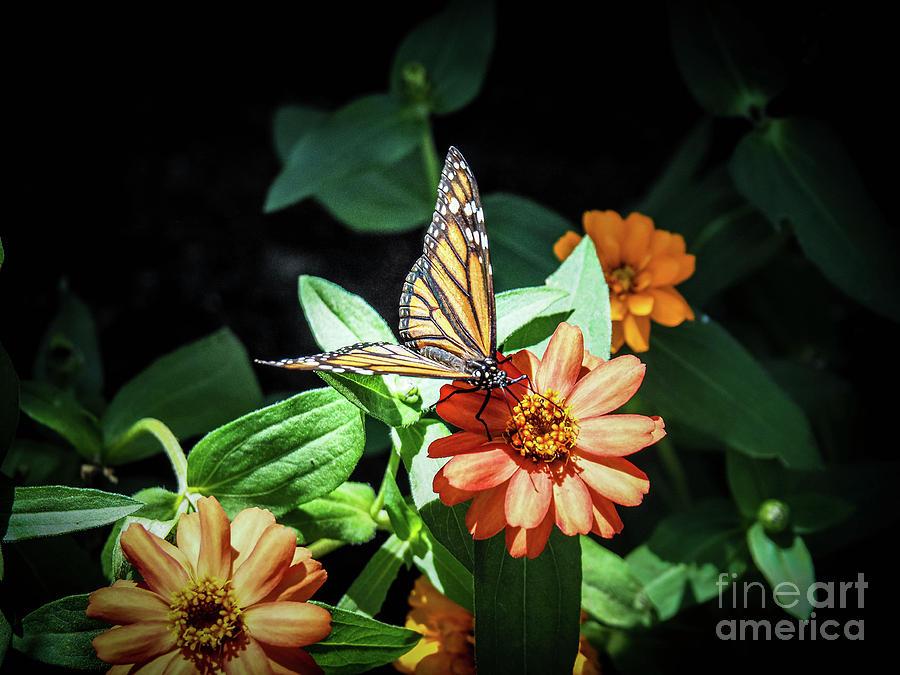 Flower Photograph - Monarch I by Gina Matarazzo
