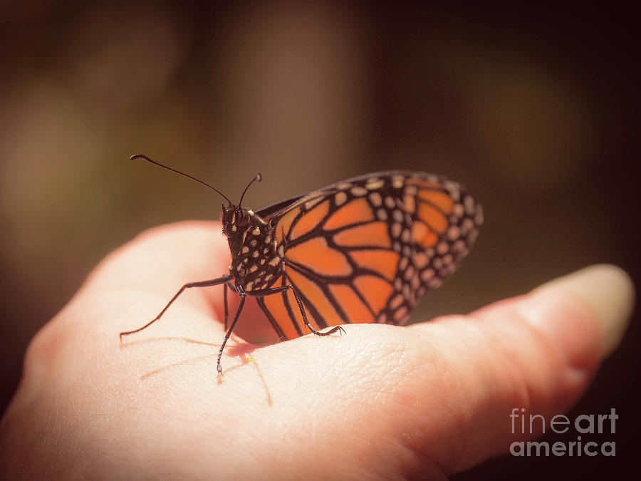 Butterfly Photograph - Monarch in Hand by Gina Matarazzo