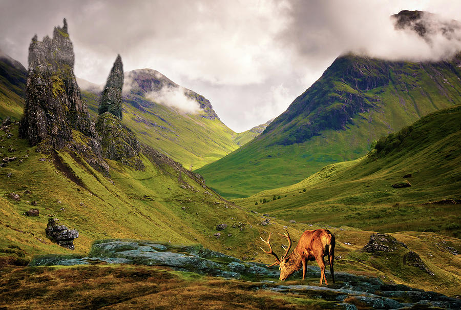 Monarch of the Glen by Paul Cullen