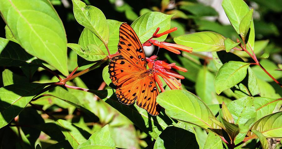 Monarch by Rick Redman