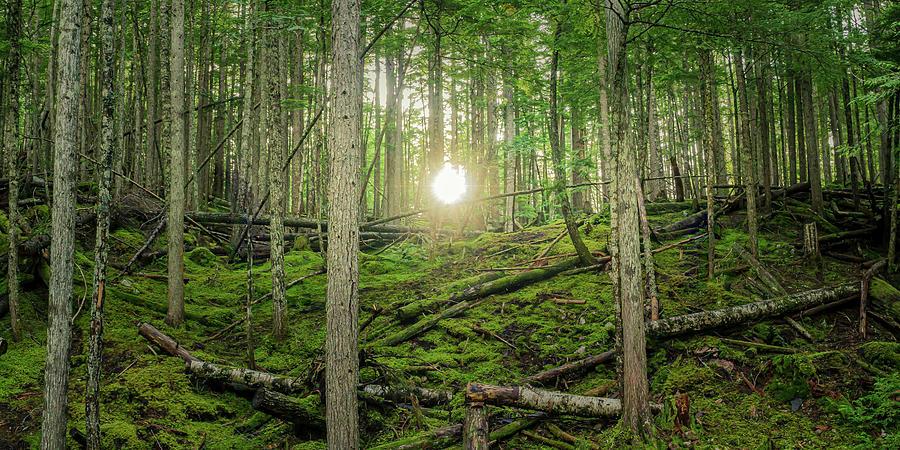 Monashee Forest Sunset by Dave Matchett