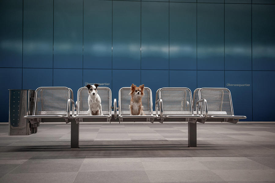 Dogs Photograph - Monday Morning... by Heike Willers