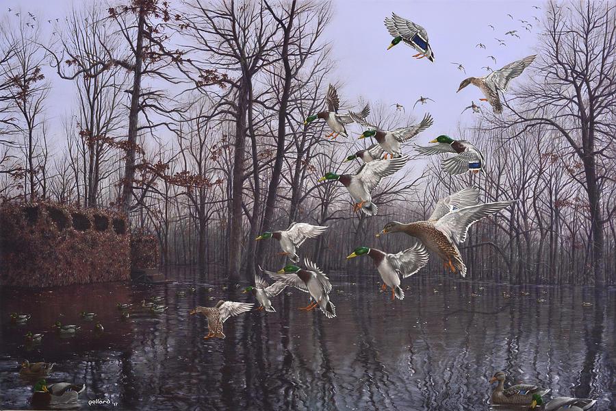 Monday Morning Mallards by Glenn Pollard