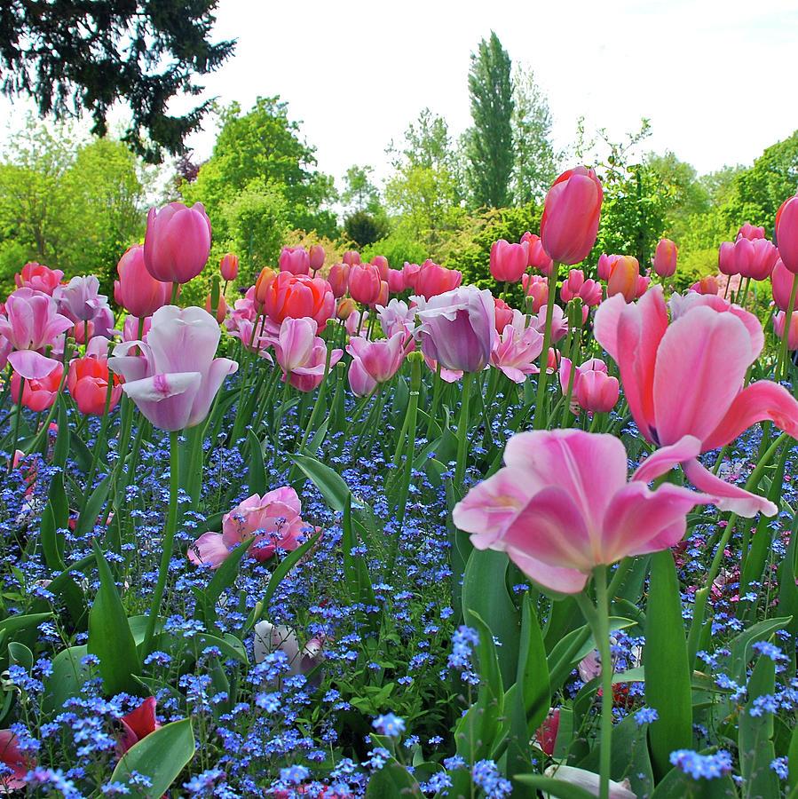 Monets Garden Photograph by Glen Buto