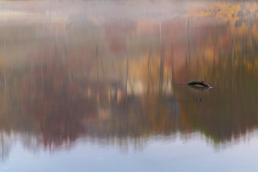 Monet's Morning by Angelo Marcialis