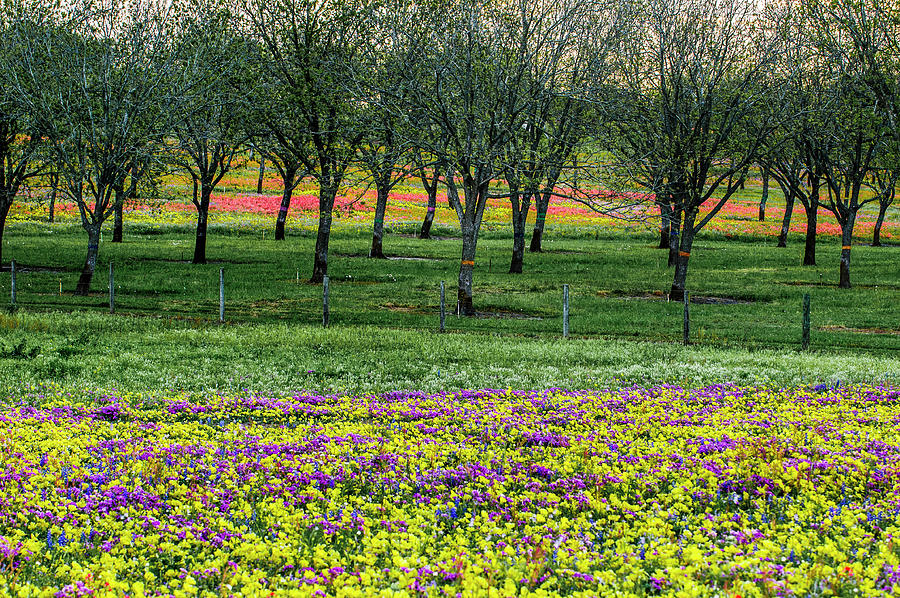 Monet's Orchard by Johnny Boyd
