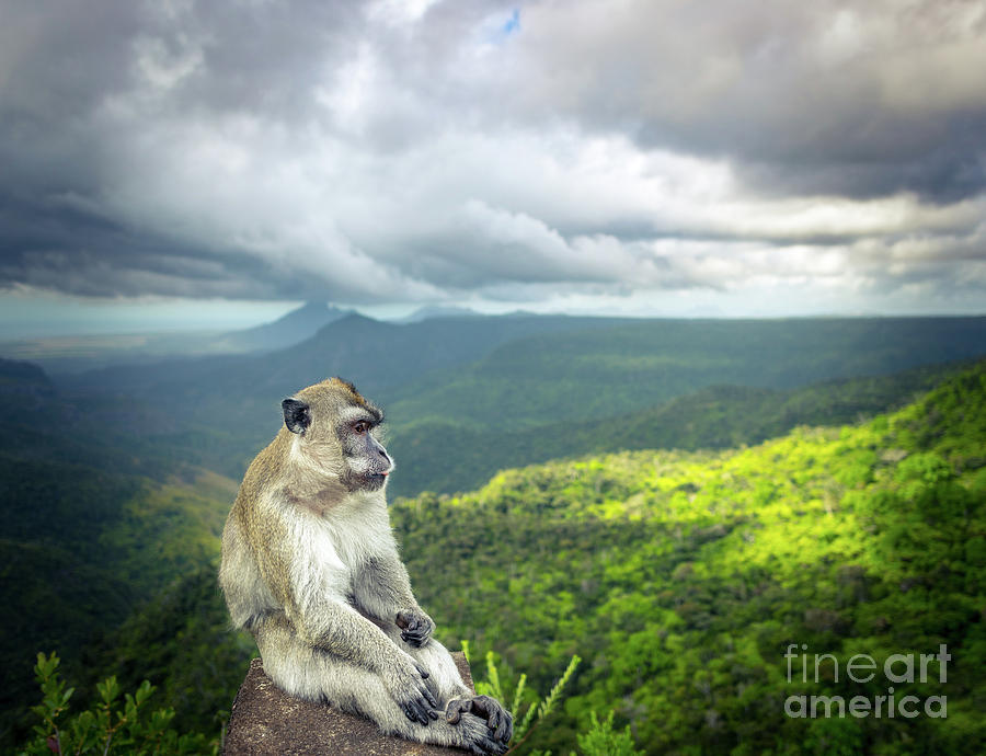 Monkey At The Gorges Viewpoint. Mauritius. Photograph
