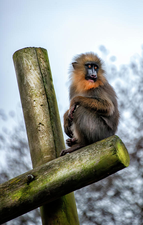 Monkey by Gouzel