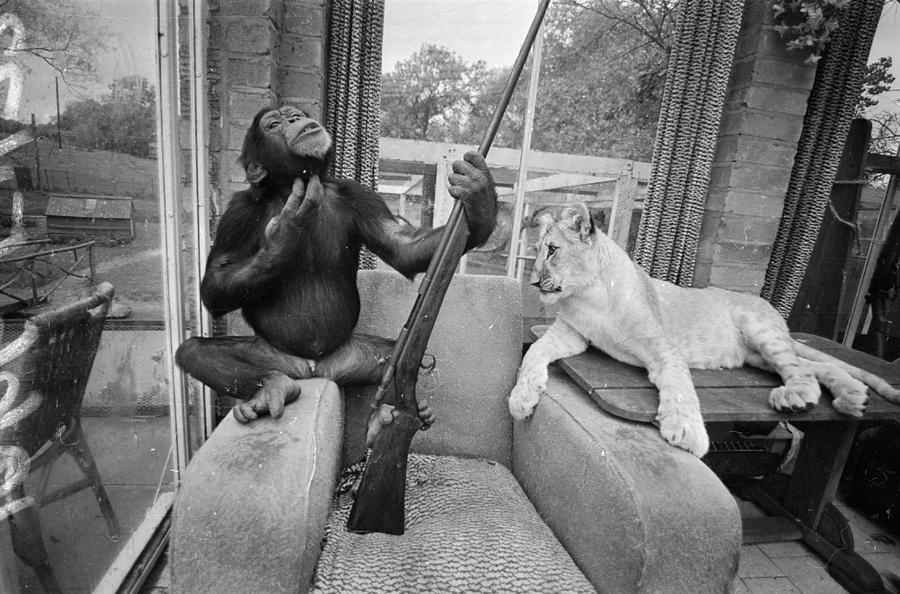 Monkeying About Photograph by R Dumont