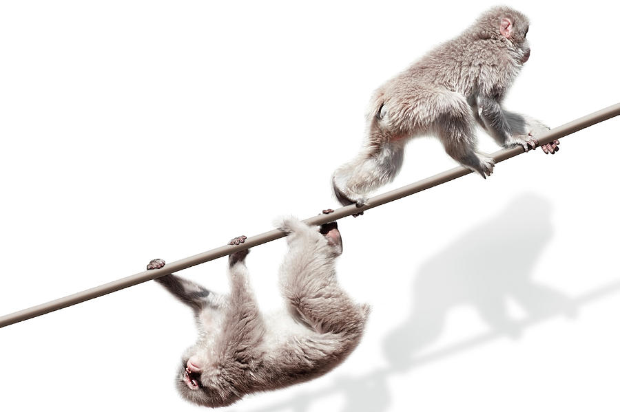 Monkeys On The Rope Photograph by Kazunori Nagashima