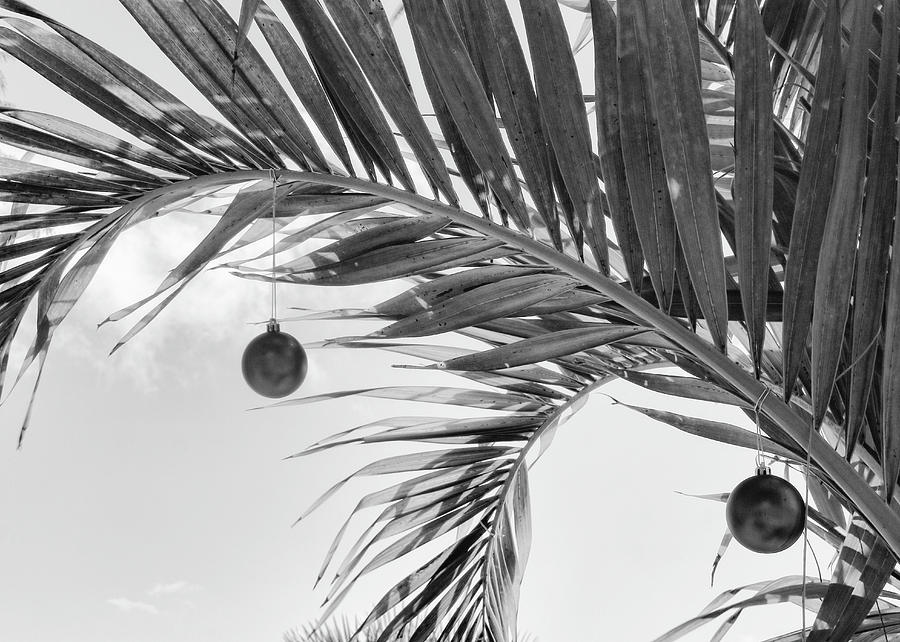Monochrome Christmas Palm by Robert Wilder Jr