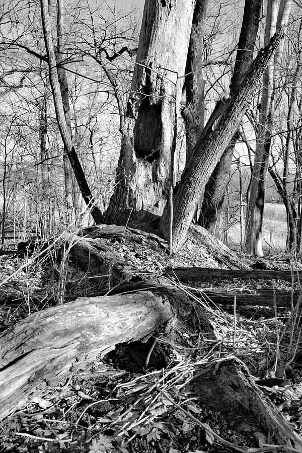 Deadfall Photograph - Monochrome Woods 2 by Bonfire Photography