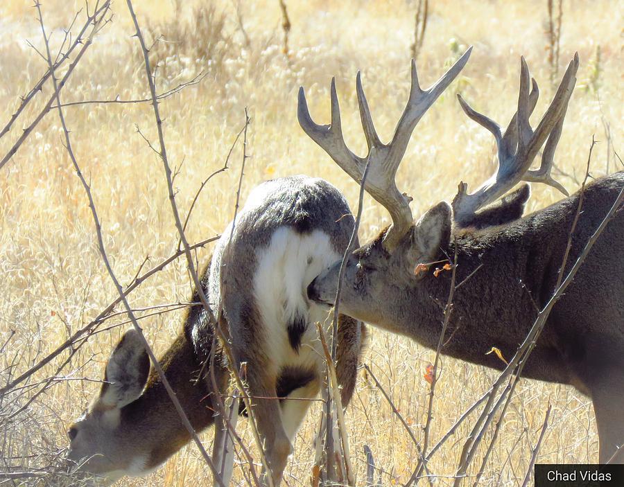 Monster Bucks 2 Photograph