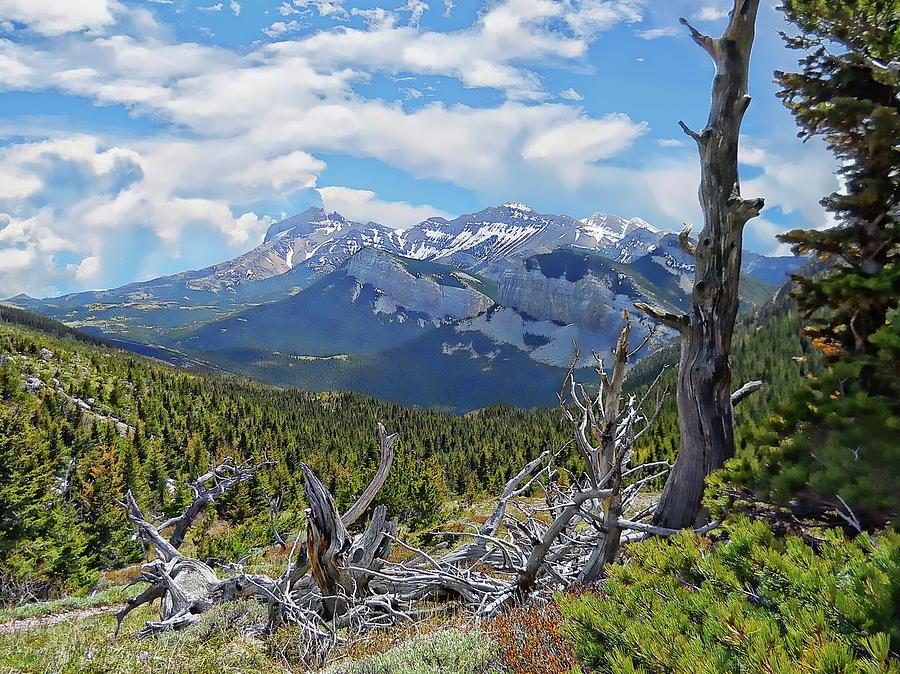 Montana Mountain Wilderness by Anthony Dezenzio