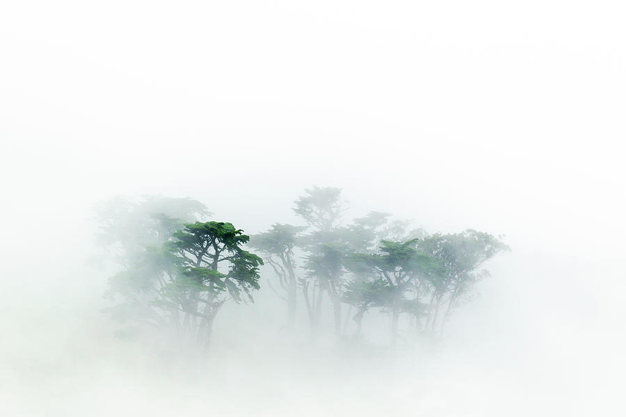 Monterey Cypress In The Fog Photograph by Sebastian Kennerknecht