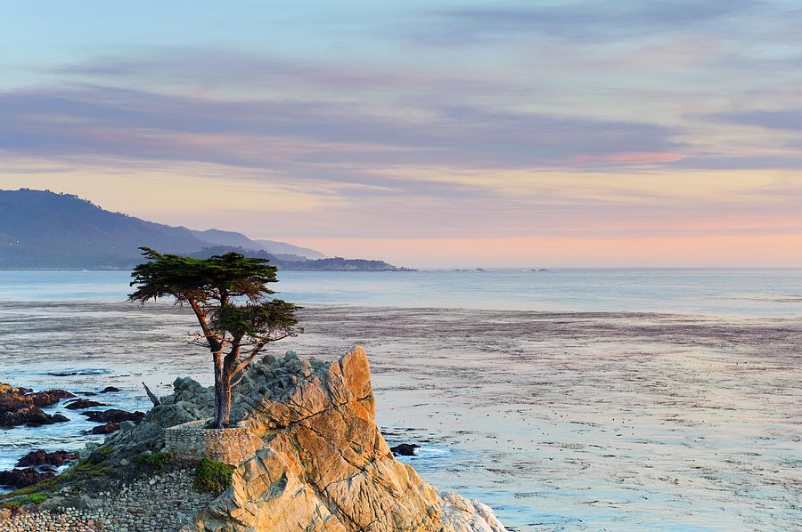 Monterey Peninsula, Lone Cypress Photograph by Michele Falzone