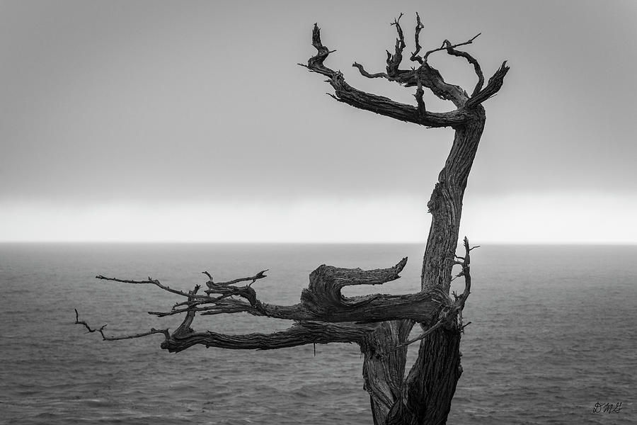 Monterey Peninsula V BW by David Gordon