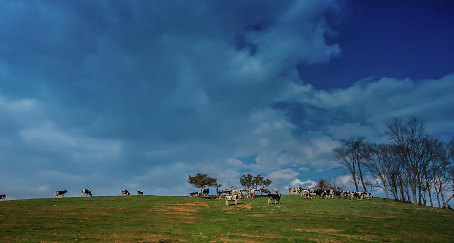 Moo Sky by Lynn Phelps