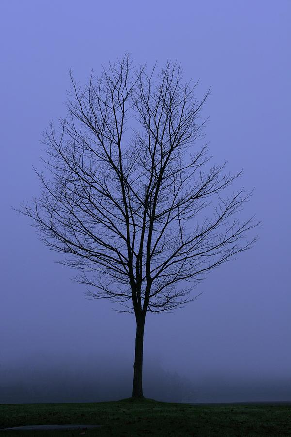 Moody Blue November Day Photograph by Zennie