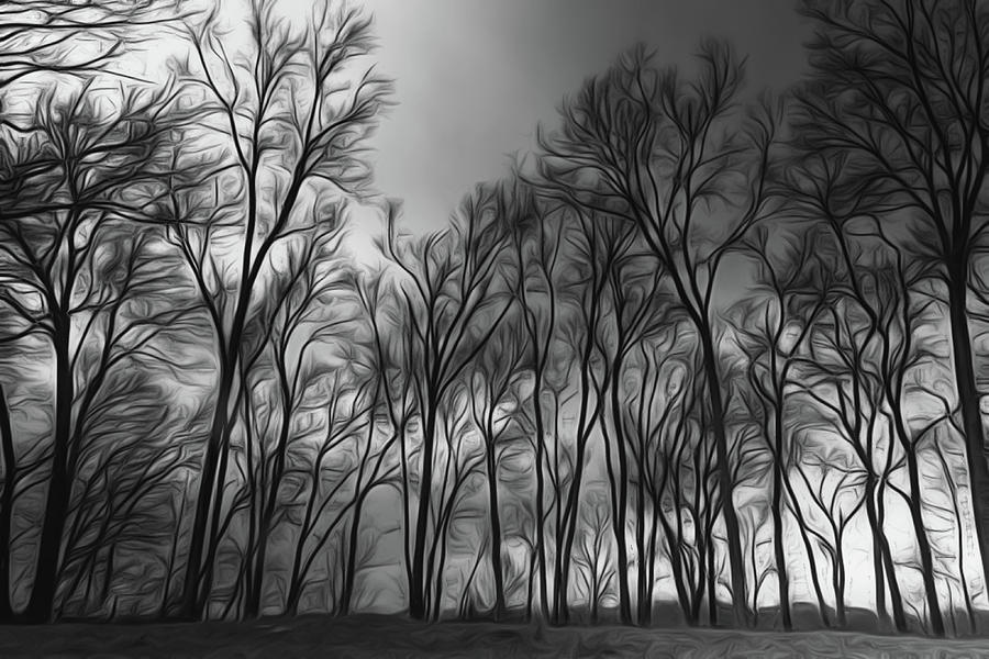 Moodywood by Davin McLaird