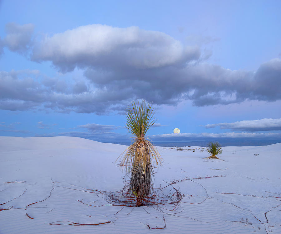Mp Photograph - Moon And Soaptree Yucca, White Sands by Tim Fitzharris
