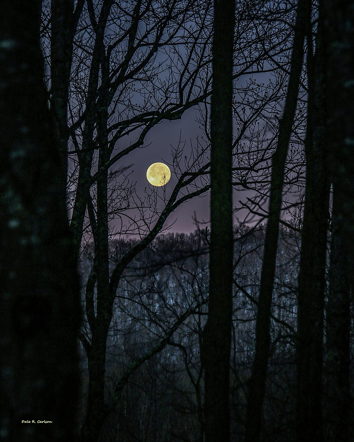 Moon Before Yule by Dale R Carlson