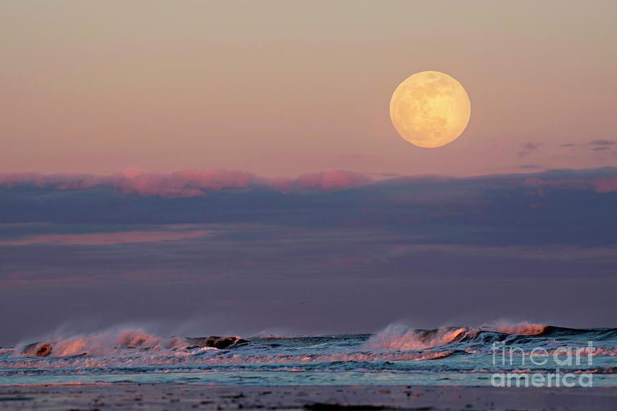 Moon Daze by DJA Images