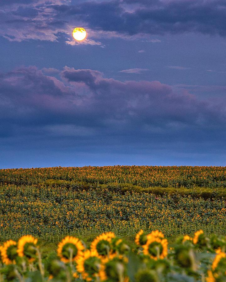 Moon Flowers by Rod Best