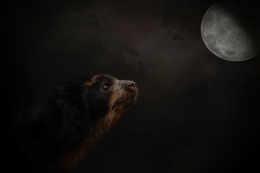 Moon Gazer by Kelley Parker
