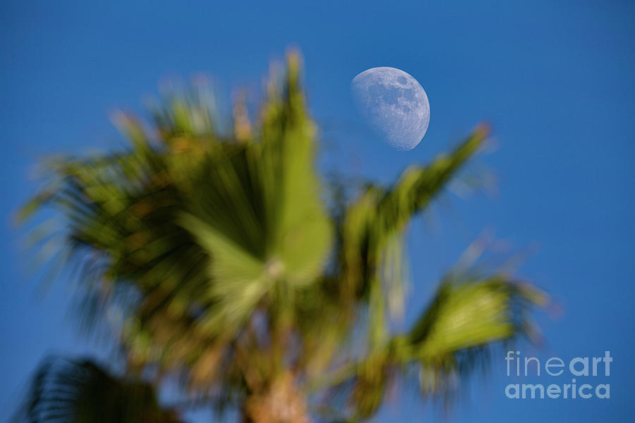 Moon Over Palm Tree by Daniel Knighton