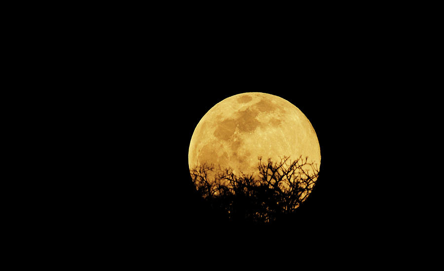 Moon Rise Photograph by Rollingearth