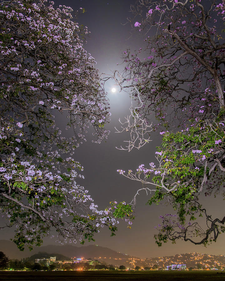 Trinidad Photograph - Moonlight And Magic by Rachel Lee Young