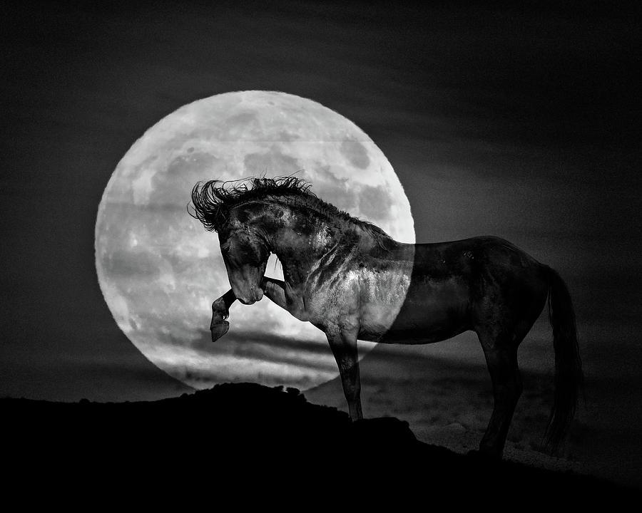 Moonlight by Mary Hone