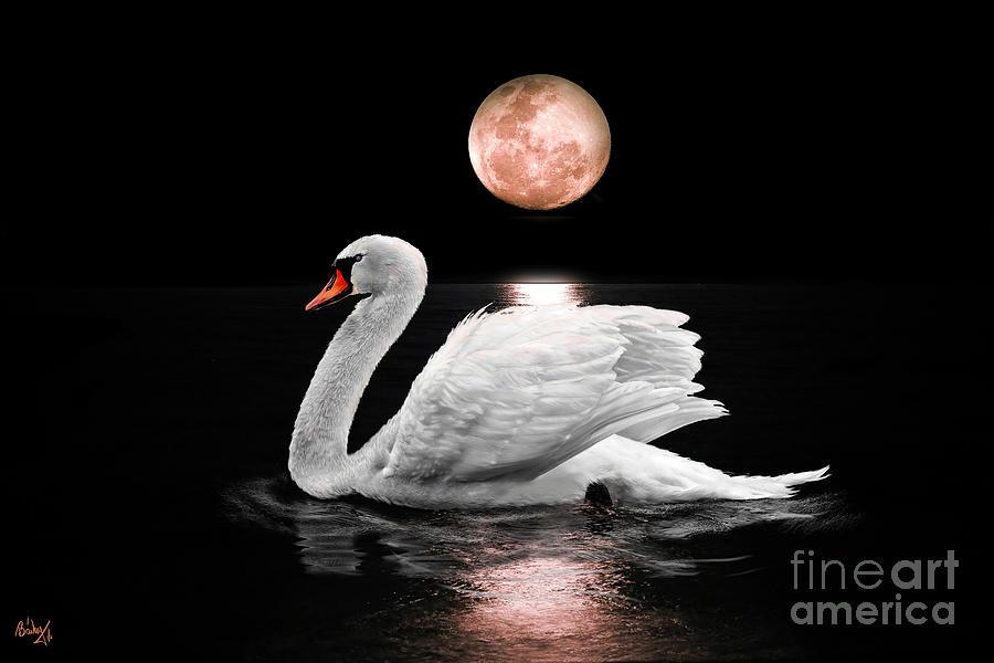 Swans By Moonlight >> Moonlight Swan Digital Art By Deb Bailey