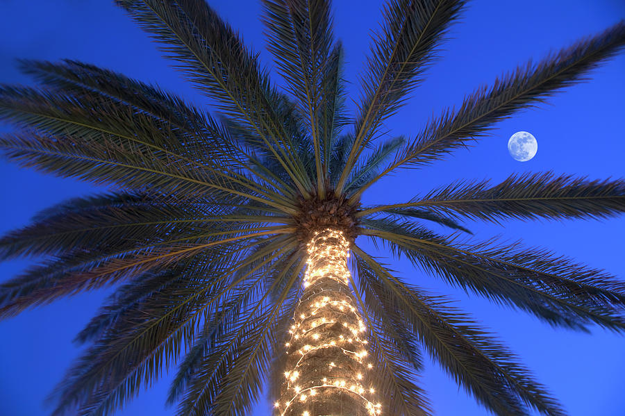 Moonrise Near Lit-up Palm Tree Photograph by Grant Faint