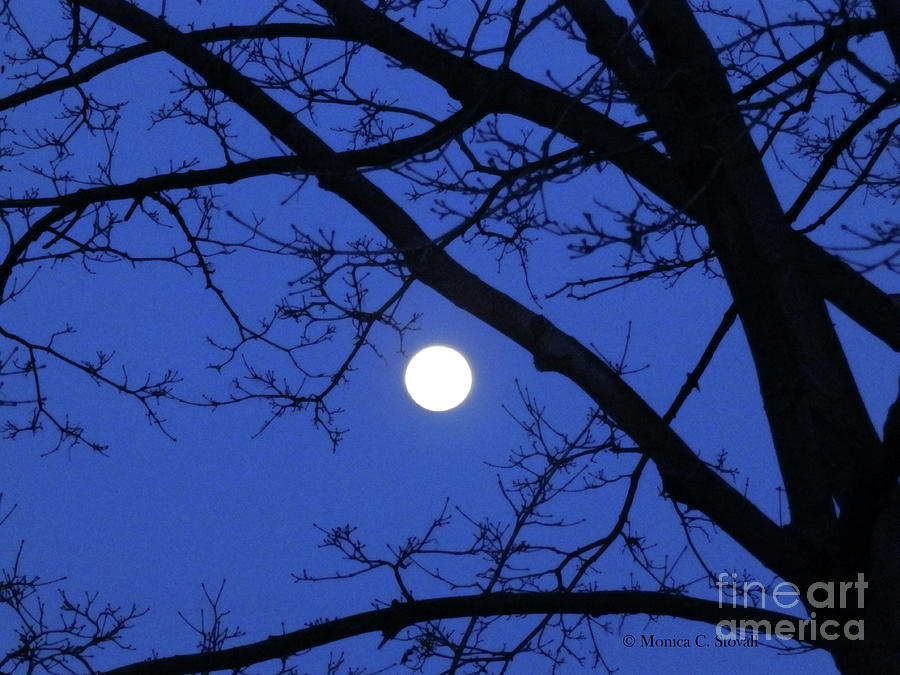 Moonrise through Maple Tree by Monica C Stovall