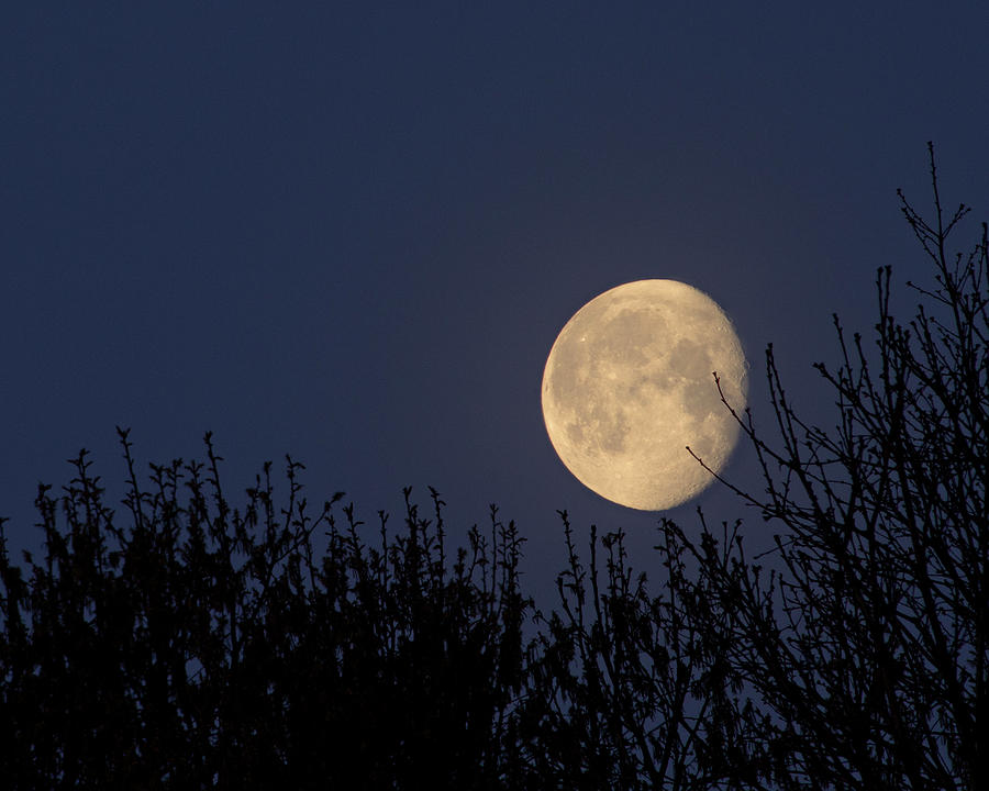 Moonset Over Trees Photograph by Doris Rudd Designs, Photography
