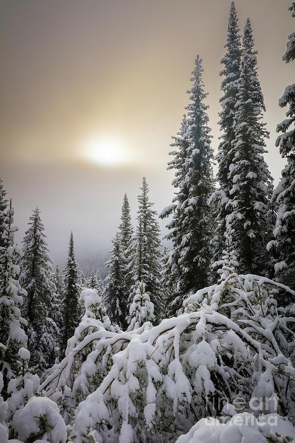 Moraine Lake Winter Trees
