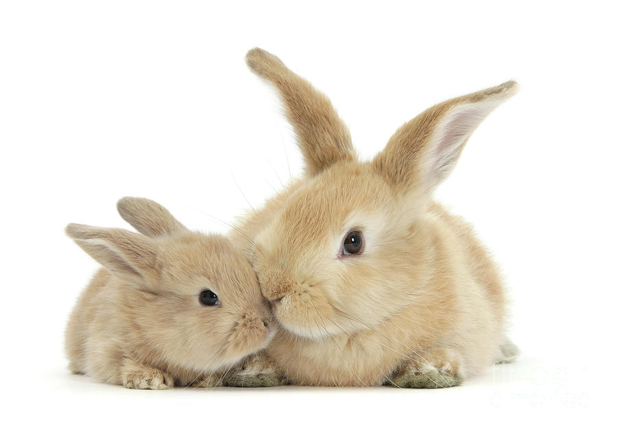 More Kissing Love Bunnies by Warren Photographic