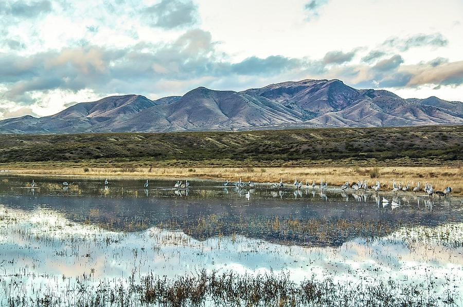 Morning Ascension Bosque del Apache NWR by NaturesPix