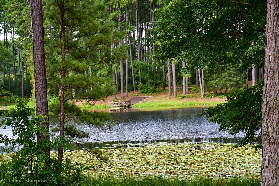 Morning at Faulkner Park by Diana Mary Sharpton