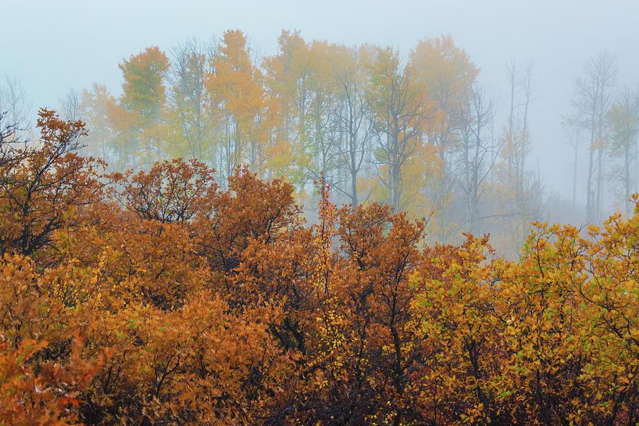Morning Autumn Fog by John De Bord