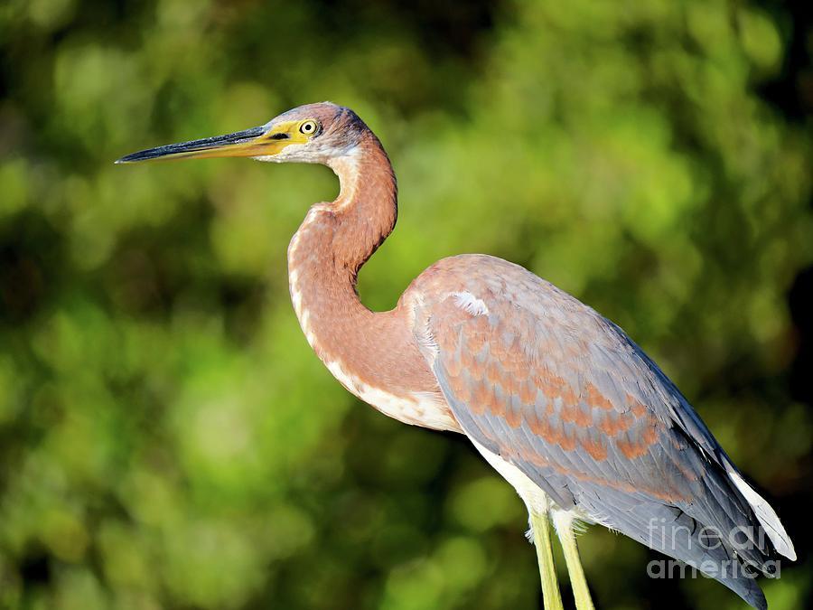 Morning Bird Photograph
