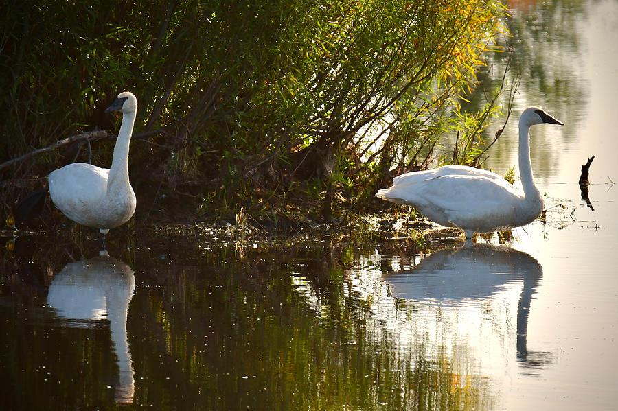 Morning Breaks on Tuttle Marsh by Michael Peychich