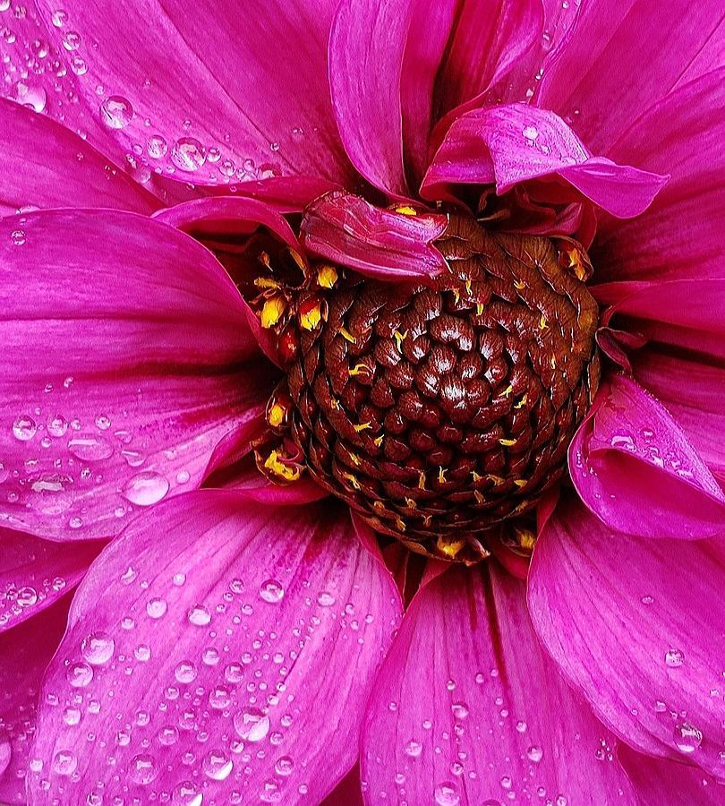 Morning Dew in Pink by Suzy Piatt