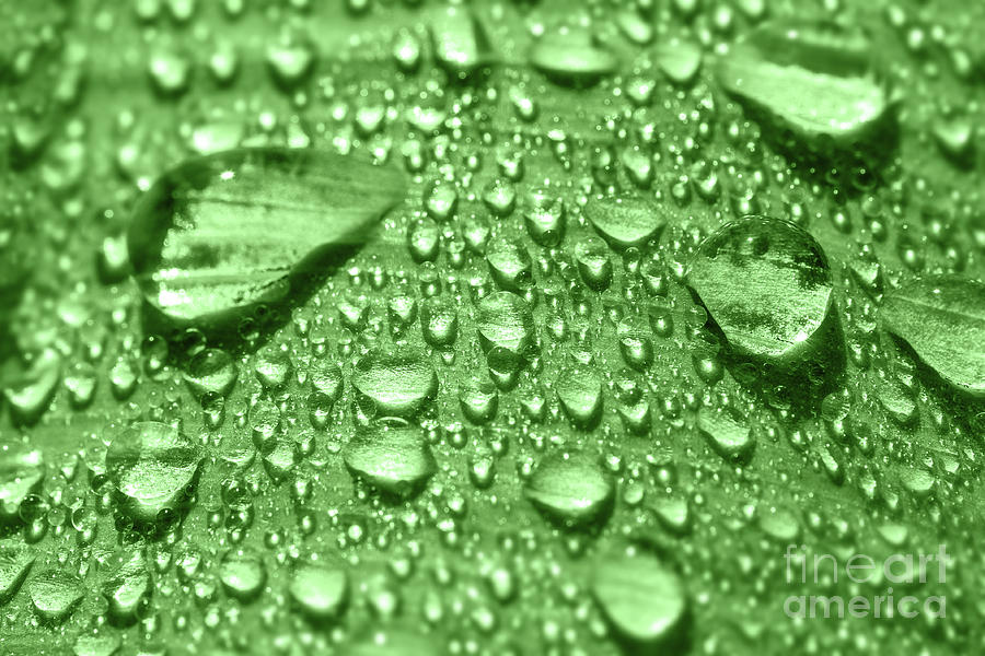 Morning dew water drop on leaf fresh nature full frame by Gregory DUBUS