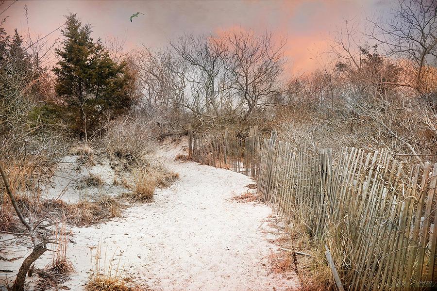Morning Dune by John Rivera
