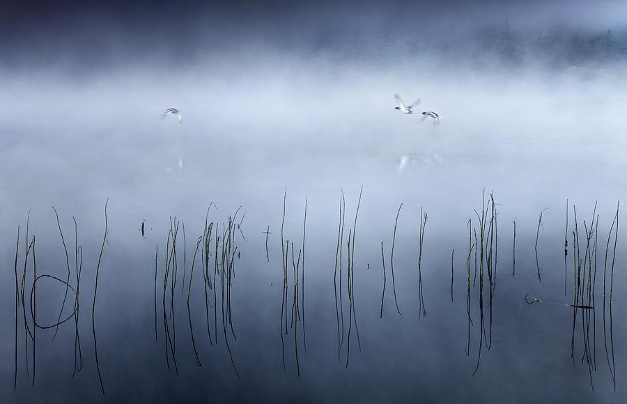 Mist Photograph - Morning Flight by Gary Mcparland