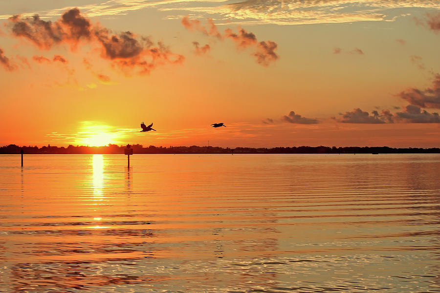 Morning Flight by HH Photography of Florida