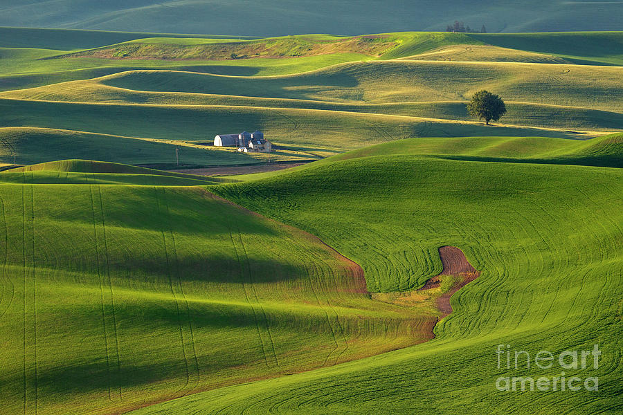 Morning Green by Mike Dawson